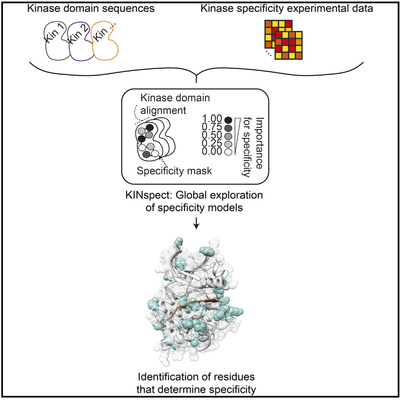KINspect Graphical Abstract